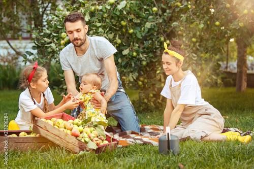 The happy young family during picking apples in a garden outdoors Tapéta, Fotótapéta