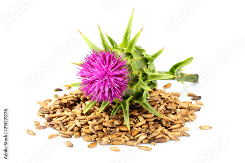 Seeds of a milk thistle with flowers (Silybum marianum, Scotch Thistle, Marian thistle )