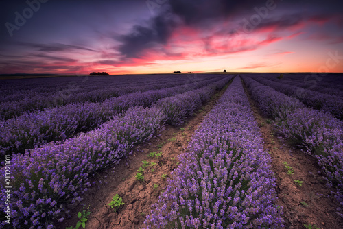 Fotografering  Lavender dream