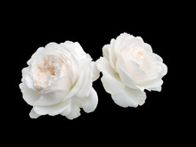 Two White Roses