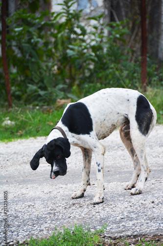 Fotobehang Koe Bahçedeki köpek