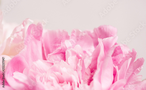 Fotografie, Obraz  Delicate pink petals of the peony. Morning, relaxation, macro