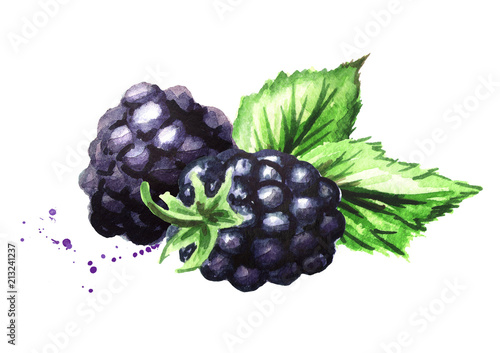 Fotografia, Obraz  Group of two ripe blackberries with green leaves