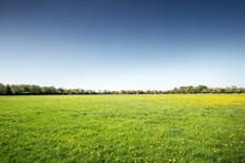 Landscape Of Green Fields