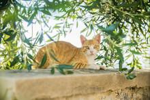 Cat On The Street In Greece