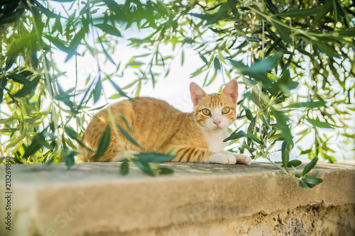 cat on the street in Greece Canvas Print