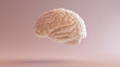 Human brain Anatomical Model 3d illustration