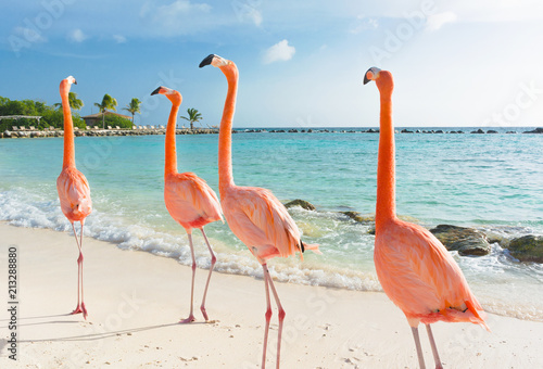 Poster de jardin Flamingo Flamingo walking on the beach