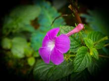 Purple Flower In Blur Background, Low Key