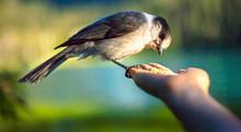 Bird Hand Feed