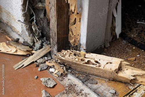 Valokuva  termite damage