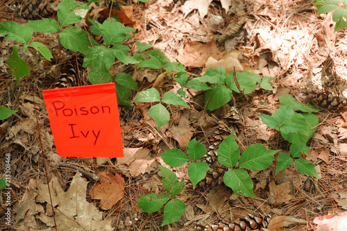 Fotografie, Obraz  poison ivy on the ground with warning flag