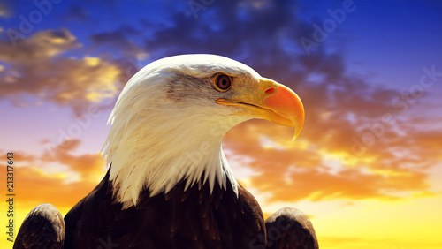 Portrait of a Bald Eagle (Haliaeetus Leucocephalus) with sunset sky at the background.
