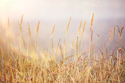 Poster Natuur autumnal background beach / dry yellow grass by the sea, landscape background with islands in the sea