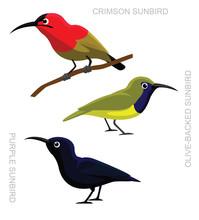 Bird Sunbird Set Cartoon Vecto...