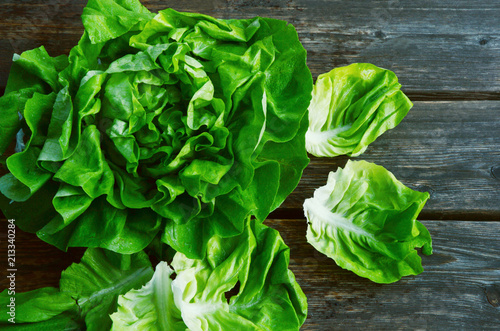 Fototapeta colorful and fresh of Butterhead lettuce with shadow on wooden background. obraz