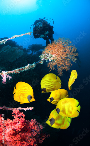 Photo of coral colony and diver.