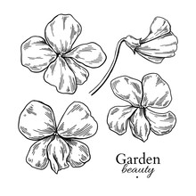Violet Flower Drawing. Vector Hand Drawn Engraved Floral Set. Vi
