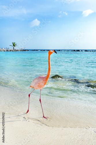Garden Poster Flamingo Pink flamingo walking on the beach, Aruba island