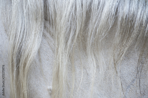 Photo Abstract close-up of the textured hairs of the mane of a white horse