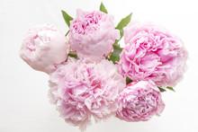 Five Pink Peonies
