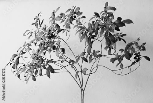 Deurstickers Bloemen Tree back and white.