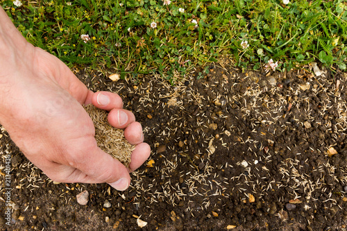 Fotografia Gardener spreading lawn seed to bare earth