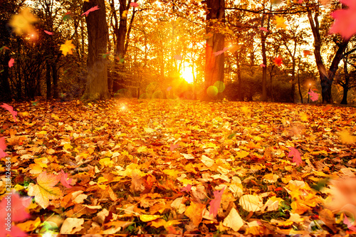 Valokuva  autumn background light sunny evening