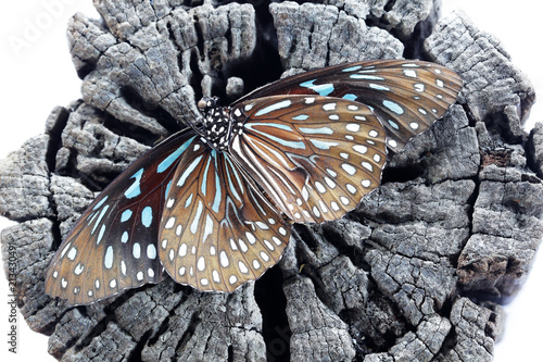 Foto op Aluminium Vlinders in Grunge dead beautiful butterfly on grunge wooden texture background isolated on white