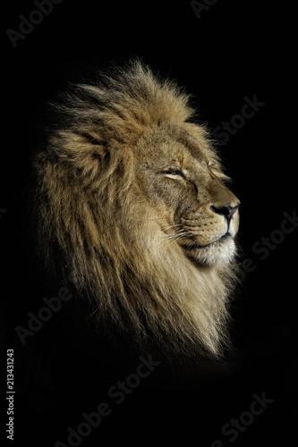 Fototapety, obrazy: The kings profile