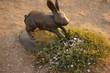 Beneficial rabbits
