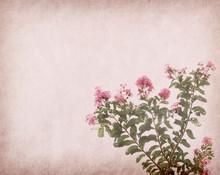 Crepe Myrtle Flowers On Old Gr...