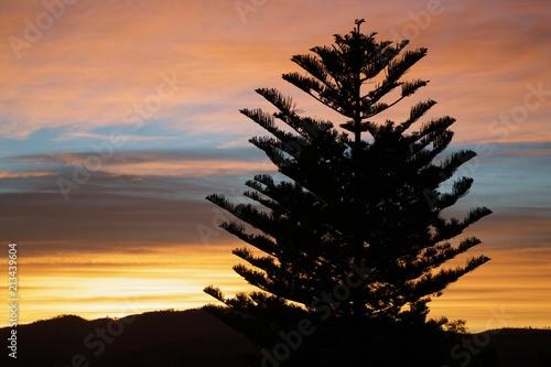 Papiers peints Cappuccino tree silhouette sunset
