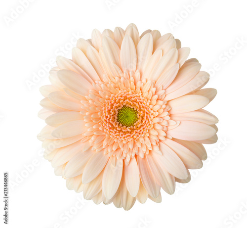 Fotobehang Gerbera Gerbera flower of apricot color isolated on white background.