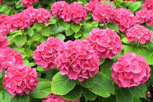 Photo rote blüten