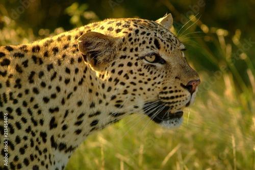 Foto op Canvas Luipaard Leopard eye