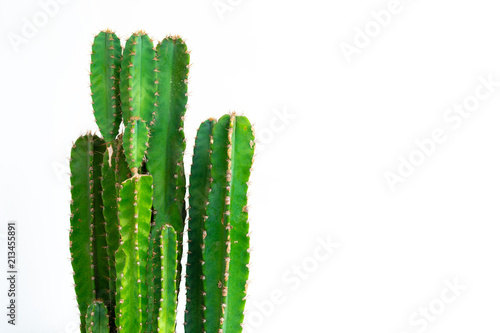 Fotobehang Cactus Green cactus isolated