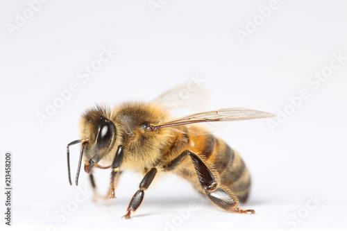 In de dag Bee abeille sur fond blanc