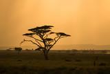 Fototapeta Sawanna - African savannah with lonely tree