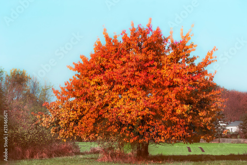 Foto op Aluminium Bomen Beautiful gorgeous tree with red autumn foliage at sky and country background
