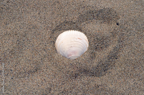 Fotomural Una conchiglia in riva al mare