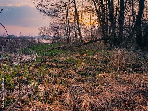 Tuinposter Diepbruine Spring landscape
