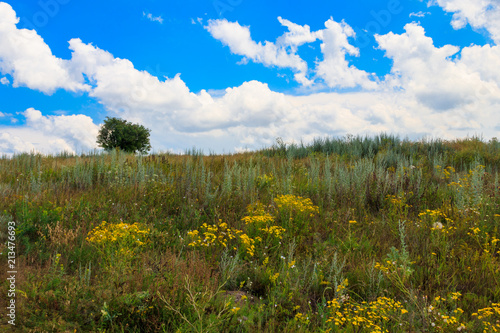 Tuinposter Blauwe hemel Summer landscape with single tree on hill, green meadow and blue sky