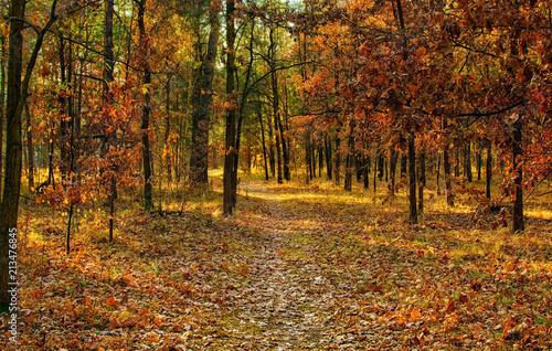 autumn sketches. landscape. autumn colors. © Mykhailo