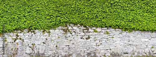 Canvastavla Schöne alte Parkmauer mit Efeu bewachsen