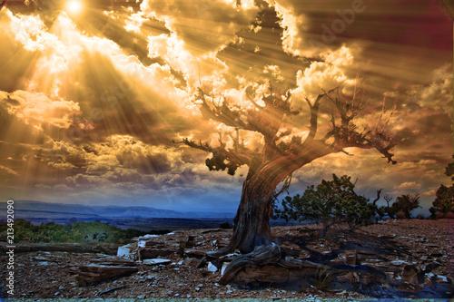 Fotografie, Obraz  Sunrise desert scene