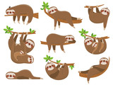 Fototapeta Fototapety na ścianę do pokoju dziecięcego - Cartoon sloths family. Adorable sloth animal at jungle rainforest. Funny animals on tropical forest trees vector set