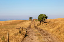 A Pathway In The Sussex Countr...