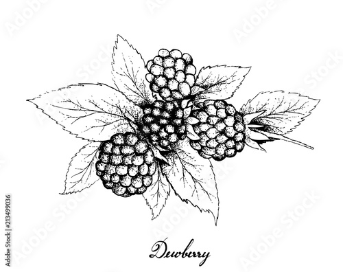 Hand Drawn of Dewberries on White Background Canvas-taulu