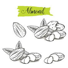 Hand Drawn Sketch Style Almond...